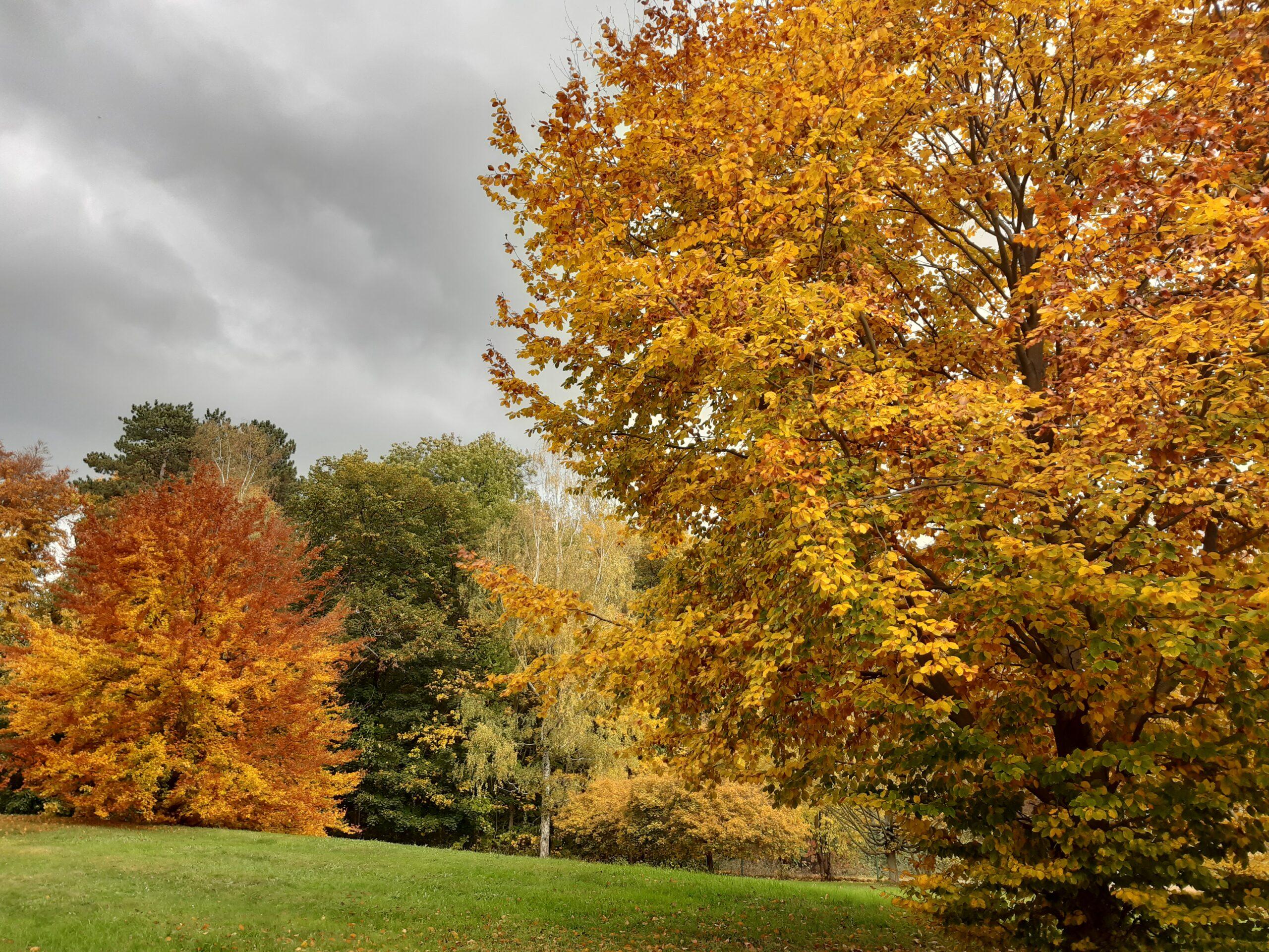 Heilpflanzen im Herbst